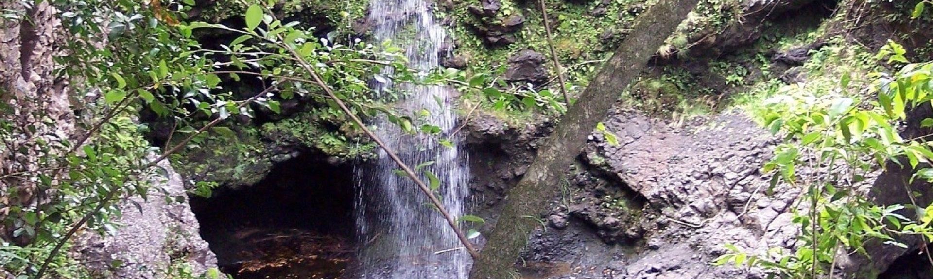 Maui Banyan, Kihei, HI, USA