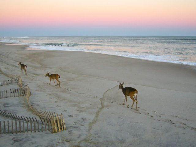 Bayberry Dunes, Fire Island, NY, USA