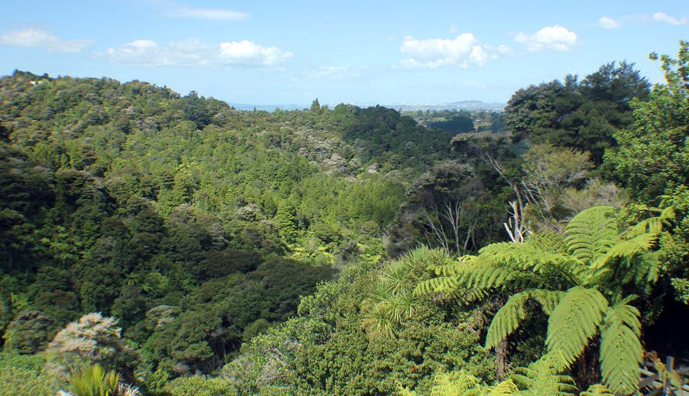 Waitakere, Rodney, Auckland, New Zealand