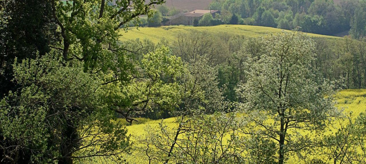 Carbonne, Occitanie, France