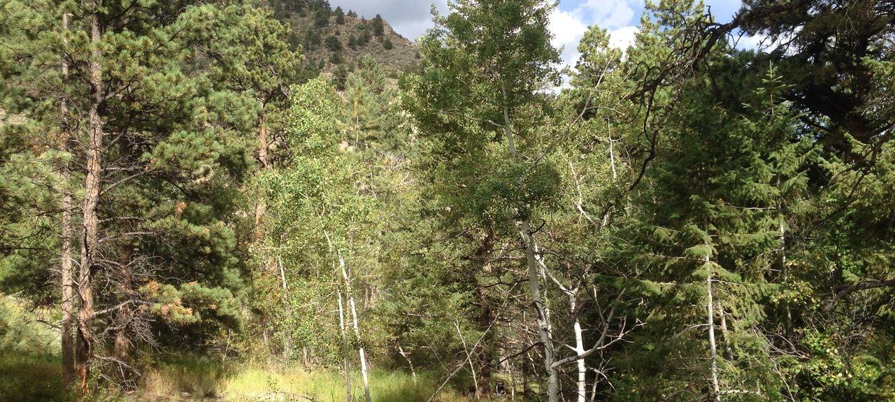 Rustic, Colorado, États-Unis d'Amérique