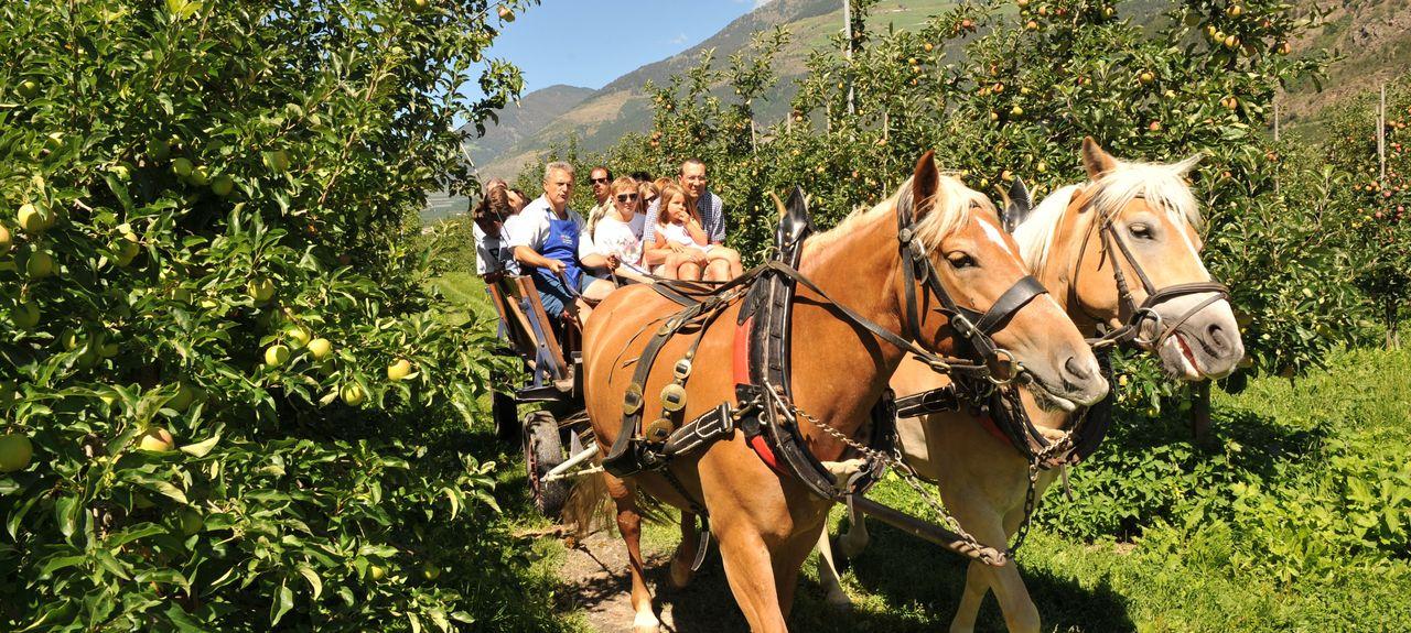 Martell, Trentino-Alto Adige, Italy