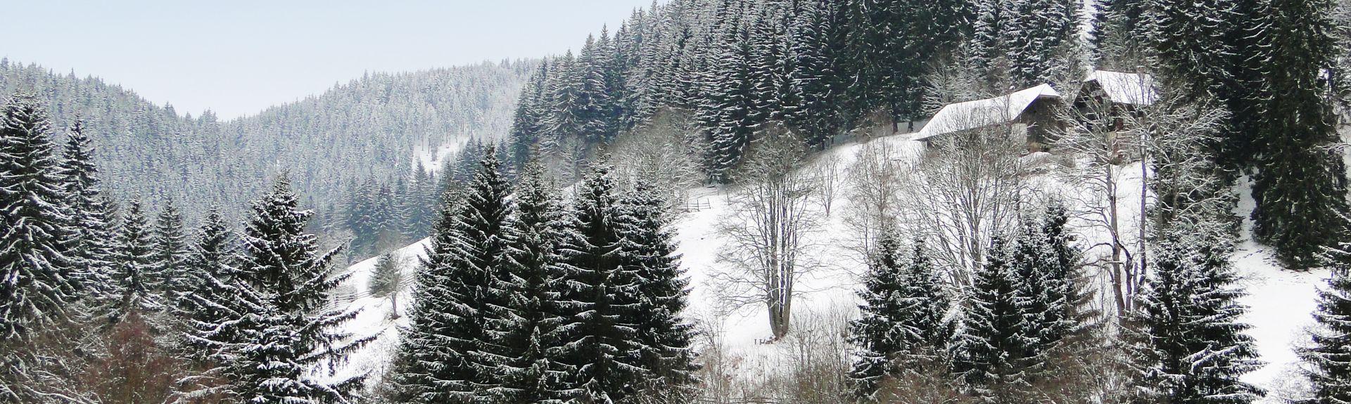 Langenwang, Estiria, Austria