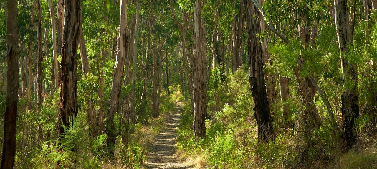 Olinda VIC, Australia