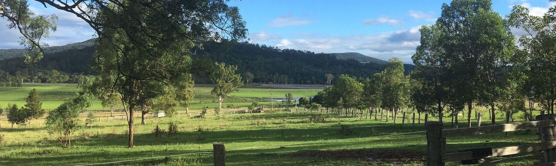 Exploitation viticole et lavandière Kooroomba, Mount Alford, Queensland, Australie