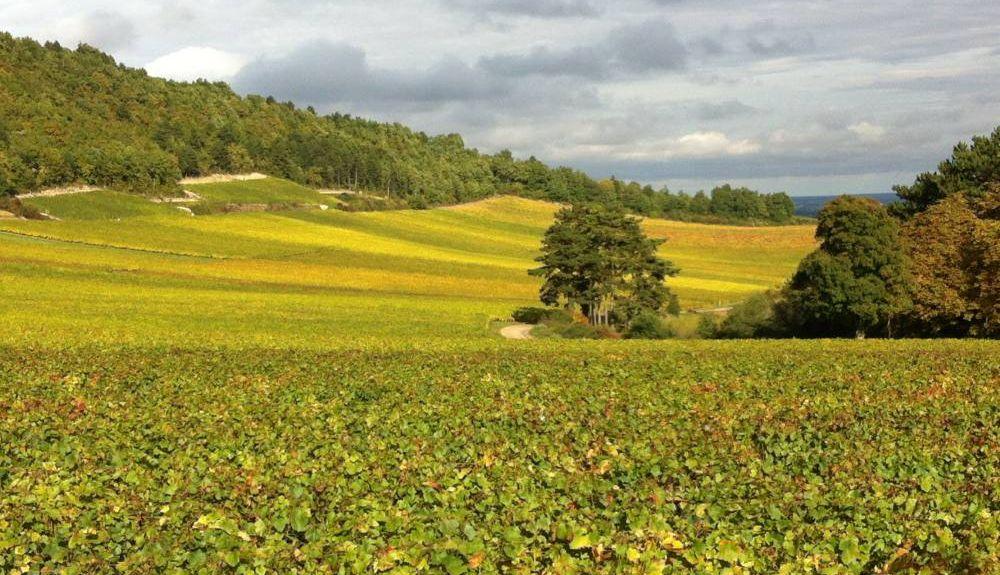 Saint-Léger-sur-Dheune, Bourgogne-Franche-Comté, France