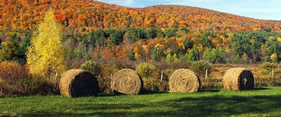 Photo for Come enjoy the Fall Foliage in the Berkshires