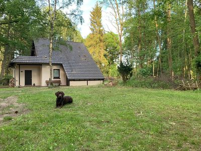 Photo for Quiet forest house in the beautiful Lüneburg Heath