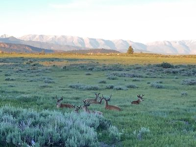 Deer at sunset beside drive into Snowcreek V.