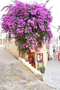 Photo for Beautiful Old House In Center Of Cadaquès