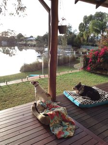 Pet Friendly beds and food bowls provided. Backyard is secure with glass fencing
