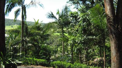 Set in a tropical garden surrounded by bush and green pastures.