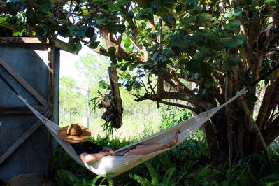 Hammocks available for use.