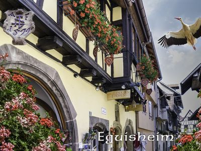 Photo for 1BR Apartment Vacation Rental in Eguisheim, Grand Est