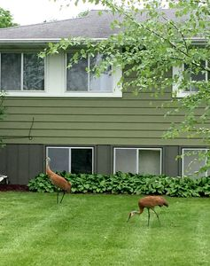 Photo for Live where Cranes watch you just as much as you watch them! A cozy home!