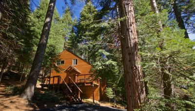 Photo for Yosemite Silvertip Lodge - Just minutes from the South Entrance!