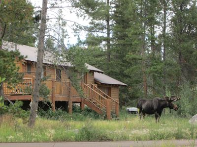 Moose Central: a local yokel welcomes visitors