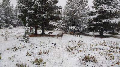 Photo for Tahoe Donner cross-country ski trails, hiking at back door. Sleeps 6