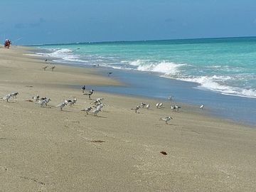 Fort Pierce Inlet State Park, Fort Pierce, Florida, Verenigde Staten