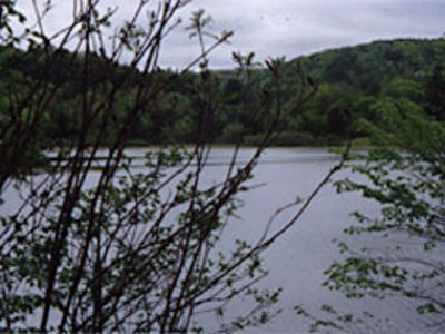 View of wildlife pond directly north