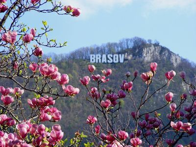 Photo for Matei'Home Old Center Brasov
