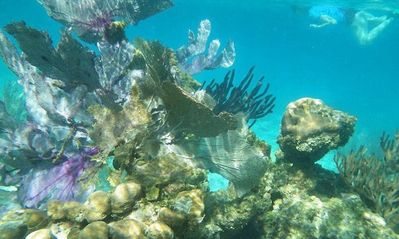 The snorkeling in your front yard is a delight