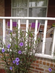 Photo for Nestled In  Quiet Residential Area. Close To Downtown Conway And Myrtle Beach
