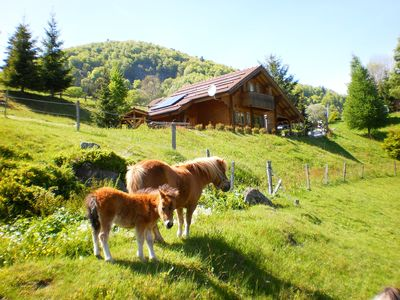 Photo for cottage mazieres the Vosges