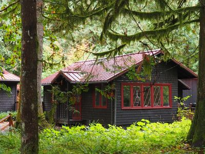 Photo for Quiet, Cozy Cottage in the Woods with Large Outdoor Area