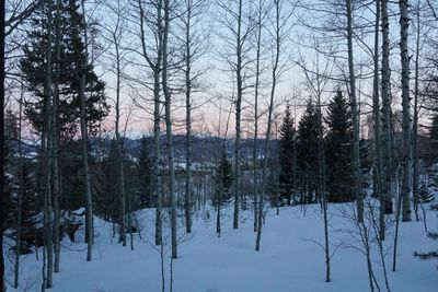 From the back deck.