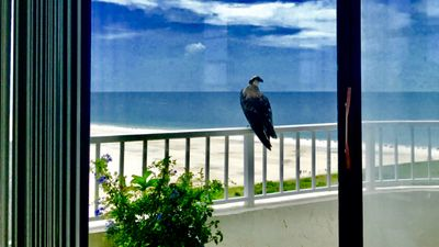 Photo for 18 Floor Direct Gulf of Mexico view ! Largest unit !!