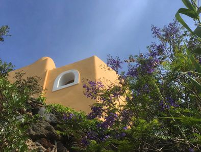 Guest house with Jacaranda flowers