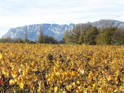 Photo for Esquirol, a getaway in the vineyards of the coasts of Provence