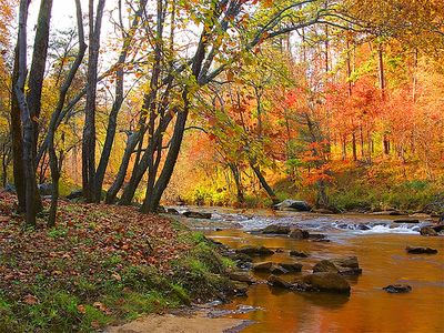 FALL View - Cabin DIRECTLY on  Broad River! A few steps to Paradise