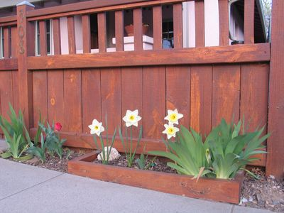 bulbs bloom in the spring