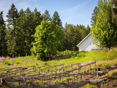 Photo for Spacious Cabin nestled in a vineyard and lavender farm, pets negotiable.