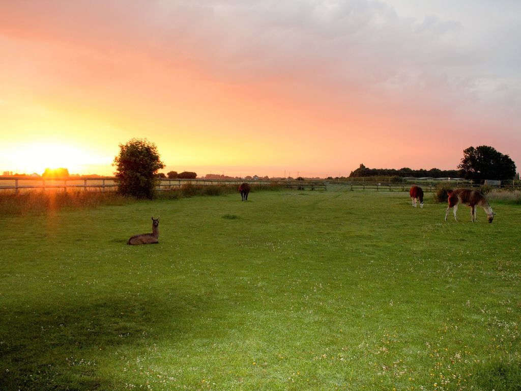 Glamping With Llamas Luxury In A Field Wisbech