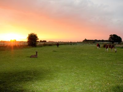 Photo for Glamping with Llamas... Luxury in a field!