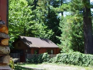 Photo for cozy cottage in the redwoods