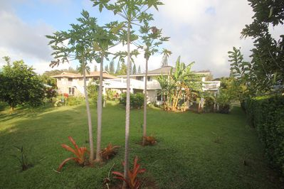 We have a large back and front yard, many tropical fruit trees, relax on lanai
