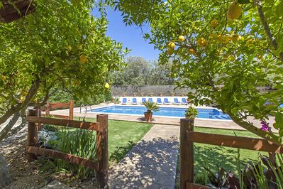 Large pool, surrounded by Lemon Trees
