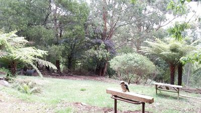 Photo for Birdsong Retreat, Olinda - Tranquil & Convenient