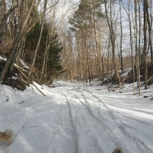 Photo for Cozy cabin in Catskill Mountains