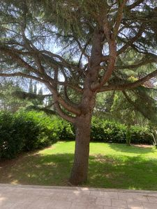 Photo for Cas a holidays the pine in Giurdignano with a large garden