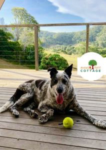 All dogs are welcomed at Mango Tree Cottage!