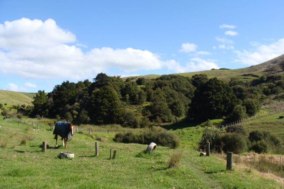 The Honey Room - Kaipara Flats, Warkworth