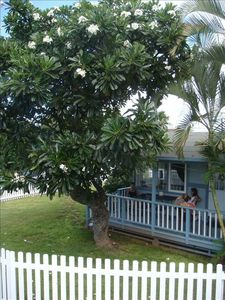 Plumeria Cottage steps from the beach!