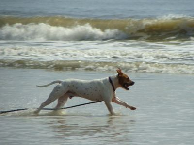 Dog Friendly Beach. This is my happy Hanky Panky... He loves the beach!