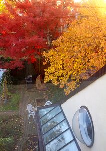 View from loft bedroom in fall