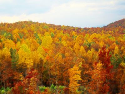 Beautiful Fall colors at the Grandview lodge from mid  September to mid November